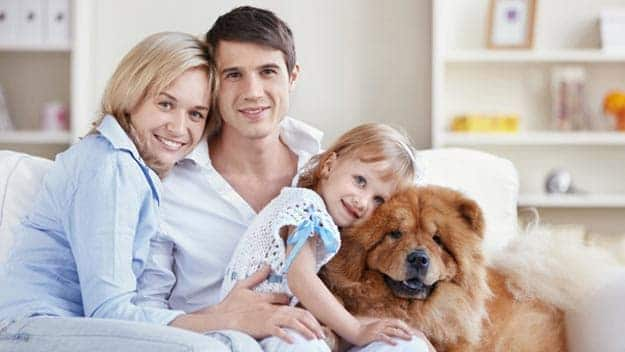 Wills & Trusts dog-young-family Direct Wills Crewe